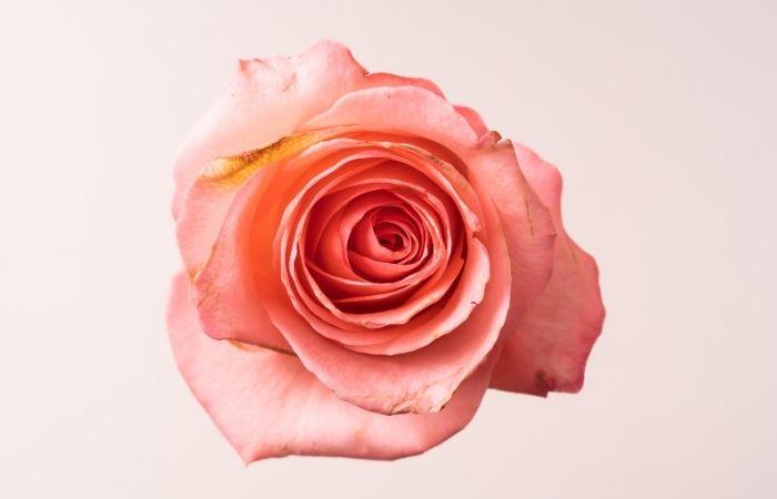 Aimer au Féminin - formation thématique APESRA